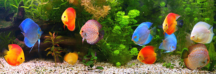 Pet freshwater fish for Fish and pet store