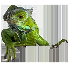 Reptile Pets | Suncoast Pets | Panama City Beach