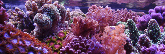 Saltwater aquariums, corals, fish, Suncoast Pets