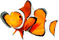 Saltwater Fish and Aquariums | Suncoast Pets
