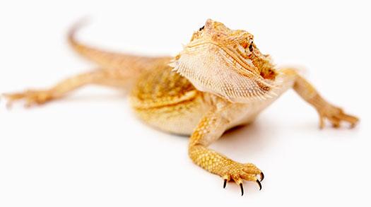 Reptiles Pets | Suncoast Pets | Panama CIty Beach